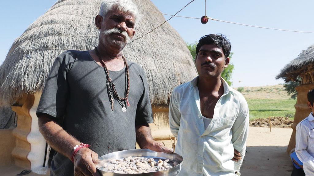 पारंपरिक फल-सब्जियों के बजाय राजस्थान के किसान मूंगफली जैसी नकद फसलों को अपना रहे हैं  (फोटो: भास्करज्योति गोस्वामी)