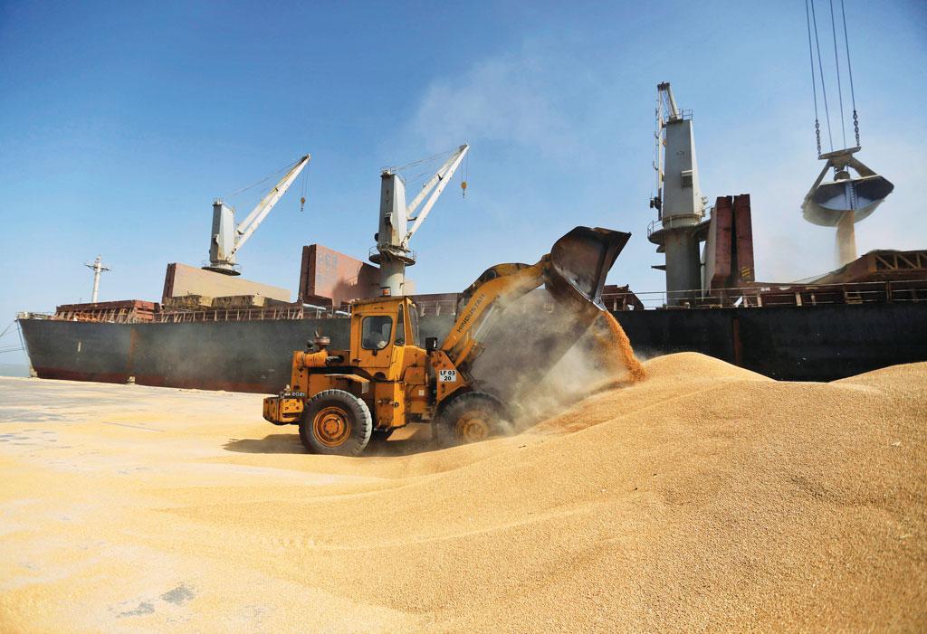 तीन साल पहले भारत ने  65 लाख टन गेहूं     निर्यात  किया था, लेकिन  इस साल देश में 50 लाख टन गेहूं के आयात की नौबत आ गई है (फोटो : रॉयटर्स )