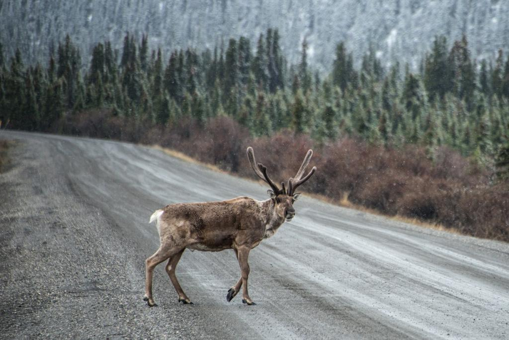 Species may need to migrate to more suitable habitats to escape harsh environments. Credit: Denali National Park / Flicker