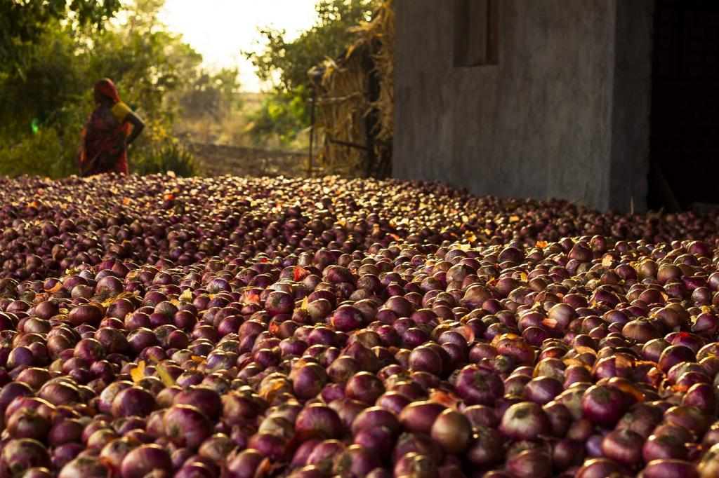 Last year, farmers were forced to sell out their onion for even less than Rs 1 per kg Credit: Vaibhav Gupta / Flicker