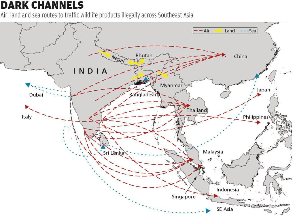 Source: Freeland India