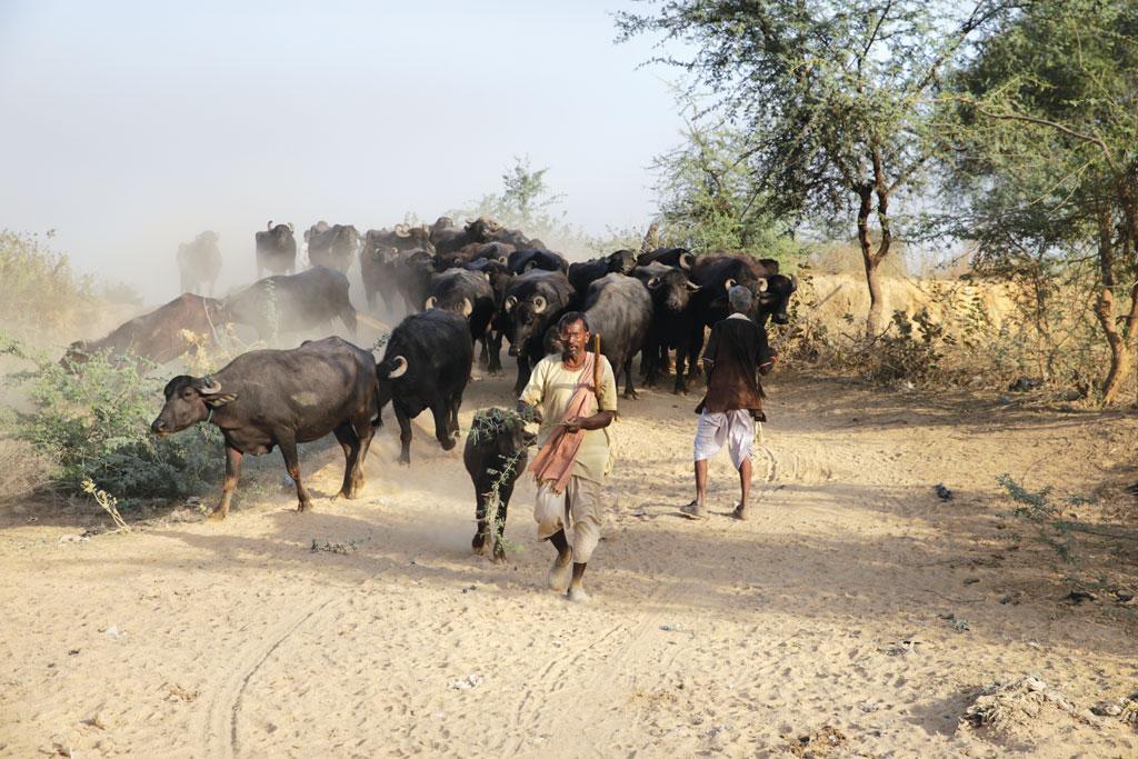 पशुपालन गांव की अर्थव्यवस्था का एक अभिन्न अंग है। सभी छोटे-बड़े किसान अपनी आय के पूरक के तौर पर मवेशी रखते हैं