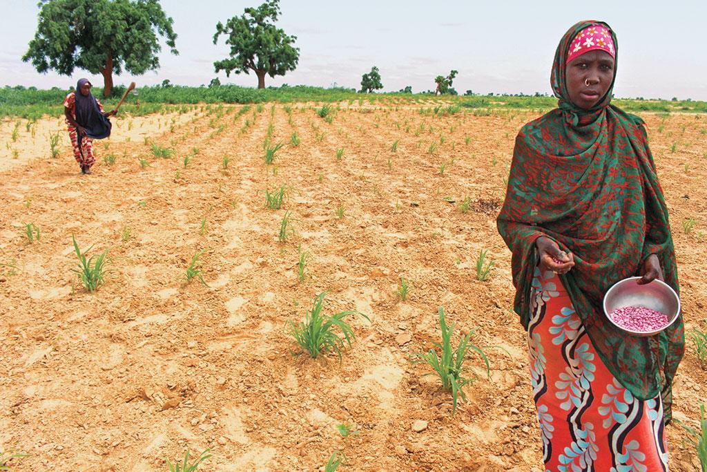 नाइजीरिया में विस्थापित किसान लोबिया का बीज रोपते हुए। अब तक एफएओ ने 123,000 से अधिक लोगों तक बीजों का वितरण किया है ताकि अकाल से प्रभावित लोग आगामी बारिश के मौसम में खुद के लिए भोजन उगा सकें