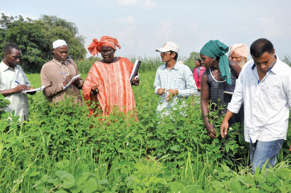 Farmers turned researchers of Burkina Faso learn tips on sustainable agricultural practices from cotton farmers of Warangal in Telangana during their visit to India a few years ago (Photo: Deccan Development Society )