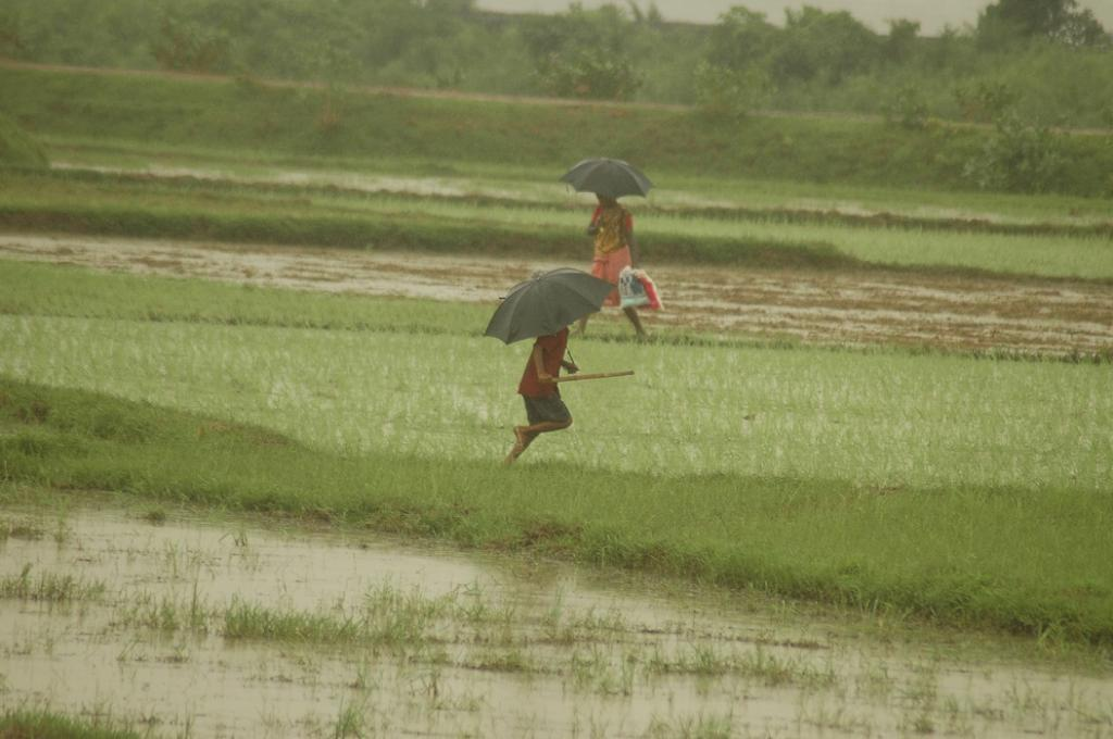 Since 2002, the daily rainfall average has increased by 1.34 millimeters. Credit: Agnimirh Basu / CSE