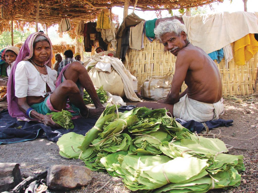 Madhya Pradesh did not share the `365 crore revenue it earned from tendu leaves over 14 years with its tribal communities (Photo: Kumar Sambhav Shrivastava)