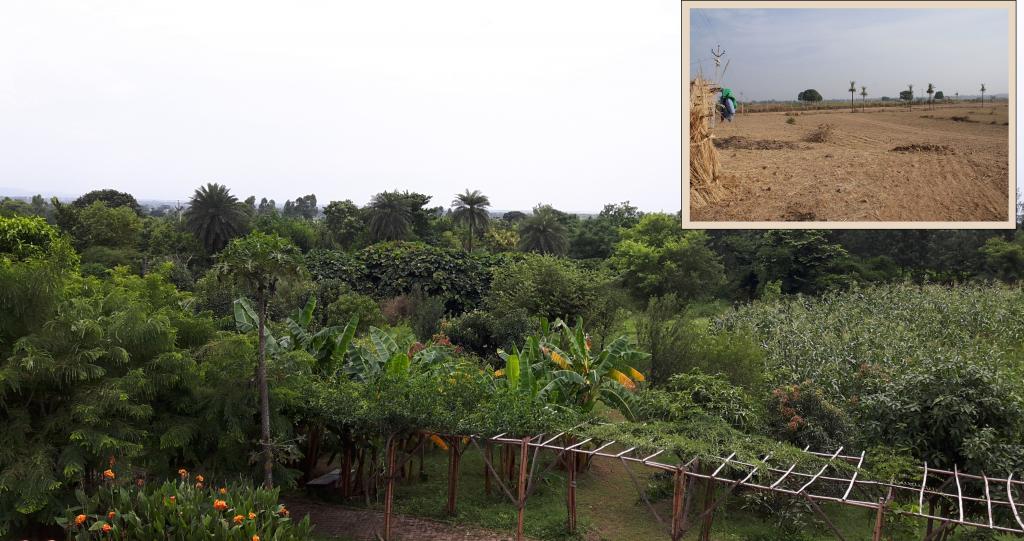 Aanandaa farm, Morni Hills, Haryana in 2017 and 2010 (inset). Credit: Author