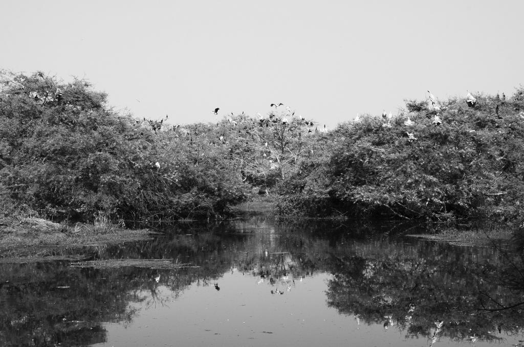 भरतपुर पक्षी अभयारण्य में पानी अब पसना बांध से लेना पड़ता है। पानी की अनियमित आपूर्ति से दलदल में बेहिसाब घास उगने लगी है