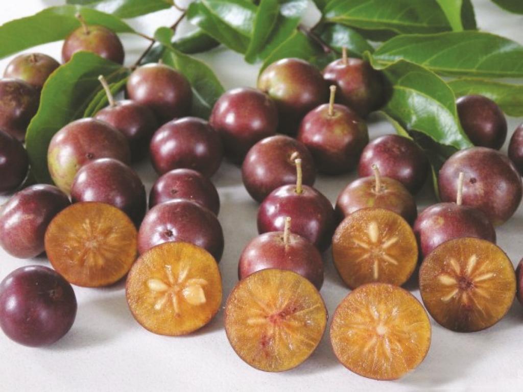 पनियाला को आंवले की प्राचीनतम प्रजाति के रूप में भी जाना जाता है। इसका पौराणिक नाम आम्लिक है