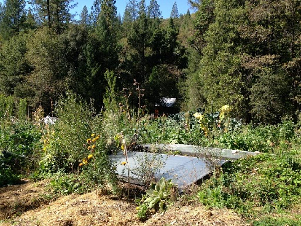 Author's permaculture farm in California. Credit: Raya Cole