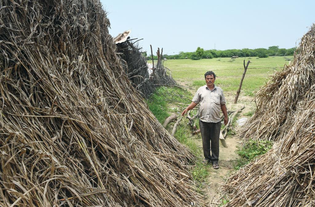जालौर सर्वाधिक बाढ़  प्रभावित जिला था। इस जिले के  चितलवाना गांव में अपनी नष्ट हो चुकी फसल के ढेर को दिखाता एक ग्रामीण