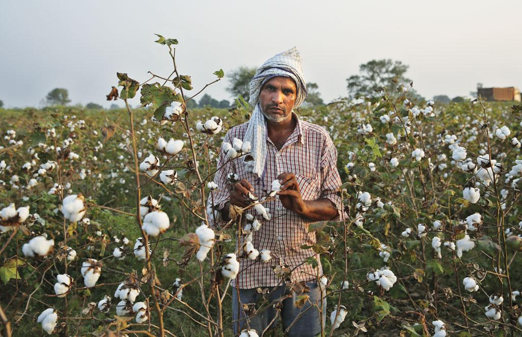 Cotton fields of Vidarbha have turned into a deathbed for farmers. Some 35 farmers have died in the region since July due to pesticide poisoning. (Photo: Vikas Choudhary)