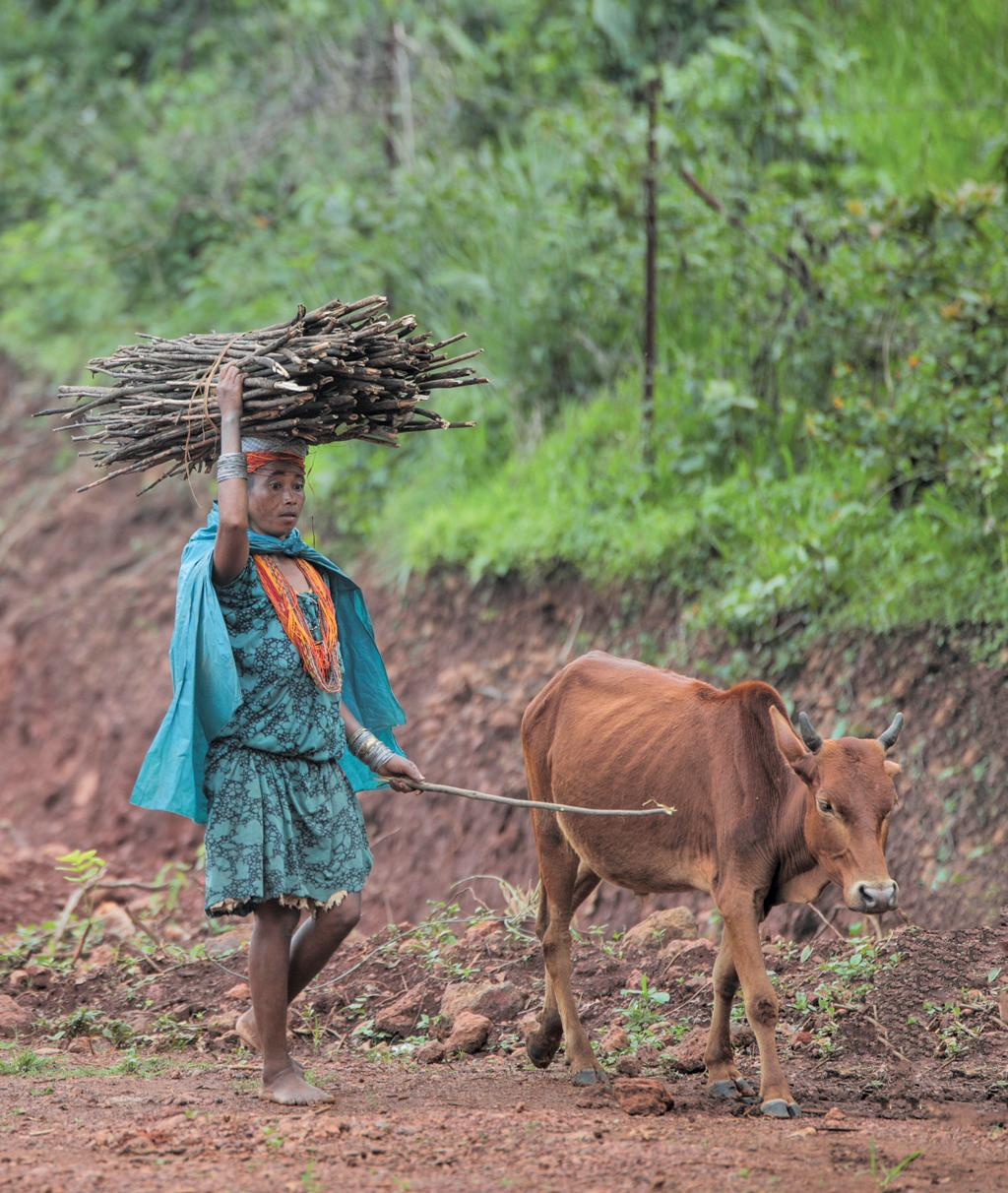 Malkangiri, Odisha: Women in India do almost 10 times as much unpaid work as men. Carrying big bundles of firewood in rural areas often falls on women's shoulders (Photo: Vikas Choudhary)