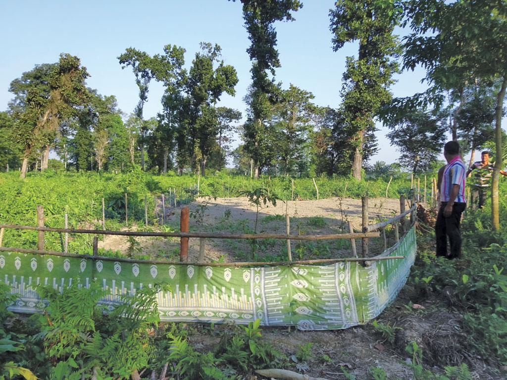 Villages in Alipurduar district of West Bengal are trying to revive the traditional practice of inter-cropping on forest land they have claimed under the Forest Rights Act