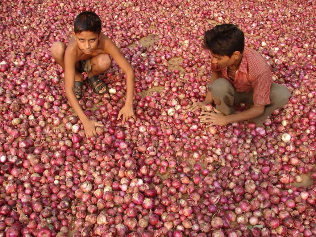 The biggest challenge that haunts horticulture  farmers is the sale and post-harvest loss. Credit: Kumar Sambhav Shrivastava / CSE