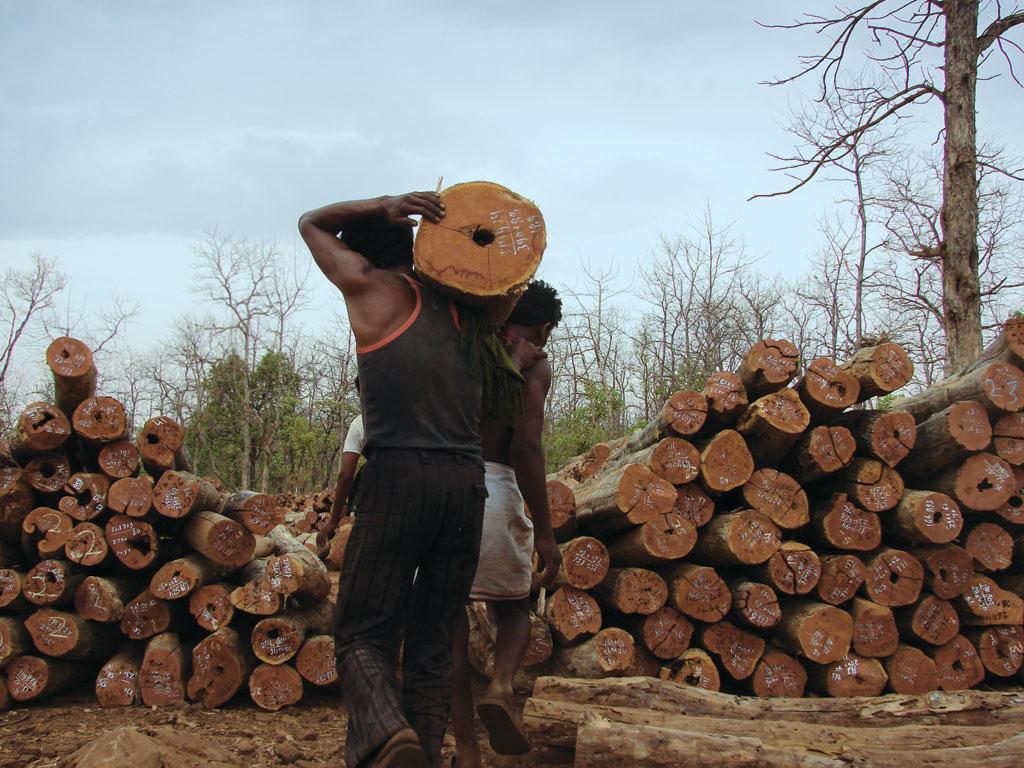मध्य प्रदेश वन विकास निगम के जंगल में स्थित लकड़ी का गोदाम (फोटो: कुमार संभव श्रीवास्तव)
