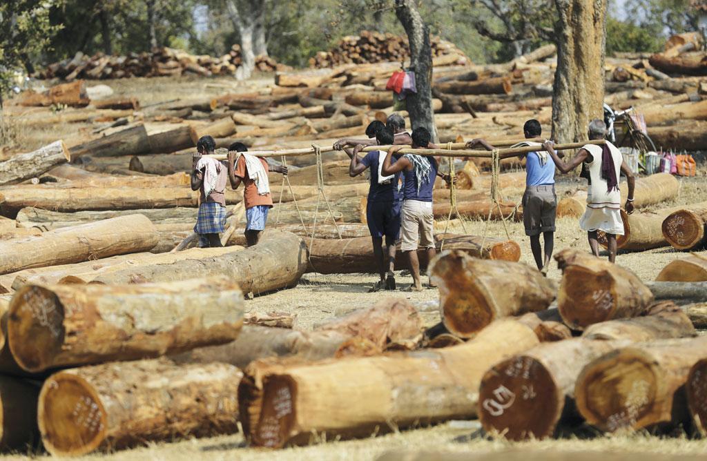 छत्तीसगढ़ वन विकास निगम डिपो में भारी लकड़ियों को व्यवस्थित करते मजदूर (फोटो: विकास चौधरी)