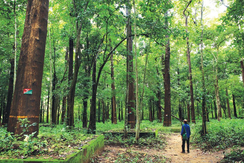महाराष्ट्र वन विकास निगम द्वारा किए गए पौधारोपण के बाद तैयार हुआ नया जंगल (फोटो: अजीब कोमची)