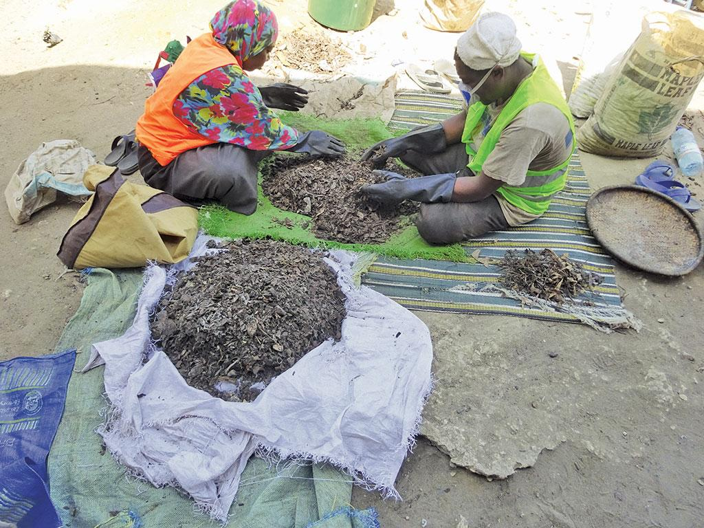 The ªWaste Segregation for Clean Zanzibarº pilot project aims to achieve 100 per cent source segregation of waste like these workers are doing  (Photographs: Sonia Henam)