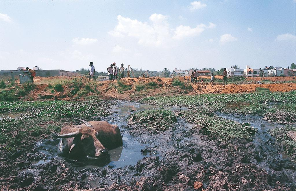 बेंगलुरु के अधिकांश तालाबों को बिना रोकटोक गंदा किया जा रहा है। उनकी जमीन पर कब्जा हो रहा है। गाद भरने से उनकी क्षमता आधी रह गई है। अधिकांश लोगों के लिए  ये तालाब गंदे गड्डे भर रह गए हैं