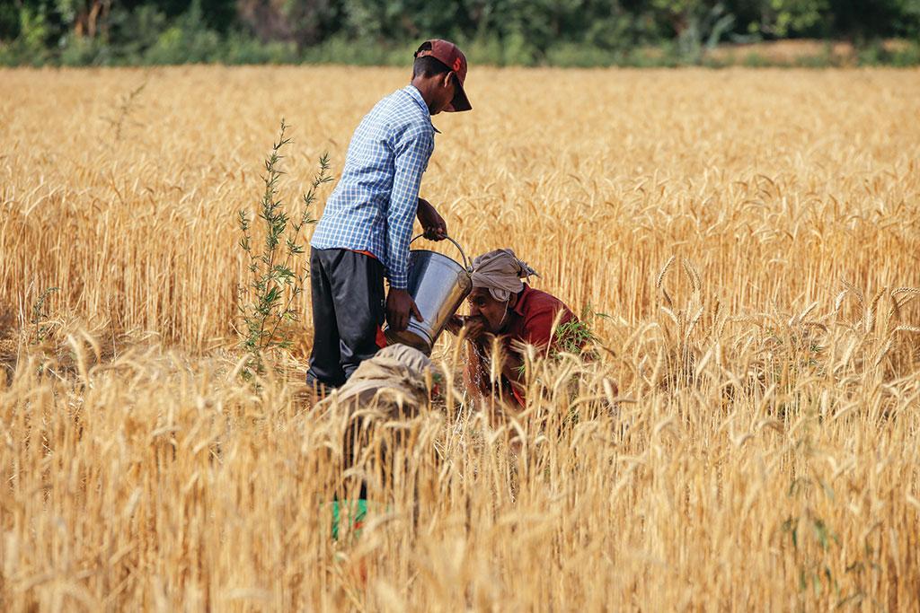 एनडीएमए ने राज्यों को  जारी दिशा-निर्देश में कहा है कि खेतिहर मजदूरों से सुबह-शाम काम लिया जाए लेकिन इनका पालन नहीं किया जा रहा है