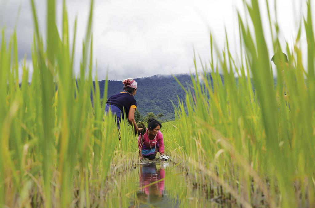 फोटो: विकास चौधरी / सीएसई