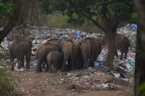 Dump yard in elephant corridor poses threat to wild animals