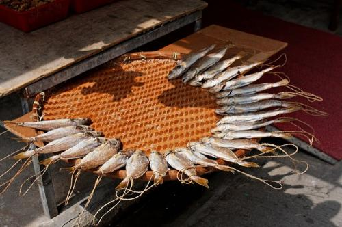 Dryland fisheries in Africa can punch in nutrition, end hunger