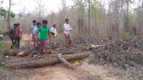 The Chattisgarh Rajya Van Vikas Nigam (CGRVVN), like most other forest development corporations in India, was created to launch an aggressive man-made forestry programme