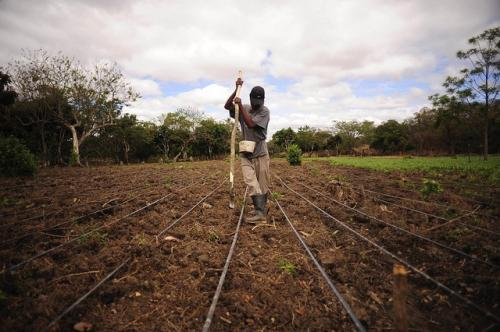 Practices such as inter-cropping, multiple cropping and crop rotation are some of the practices farmers are using to fight climate change Credit: CIAT/Flickr