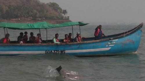DTE Impact: Goa to regulate boat tours affecting corals, dolphins