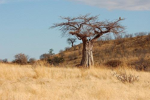 Increasing tree cover in drylands can ensure food security, solve water crisis