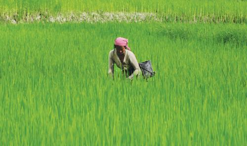Crop insurance scheme hits premium hurdle