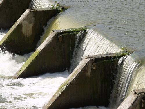 Changes in pattern of water releases from dams can help restore aquatic diversity