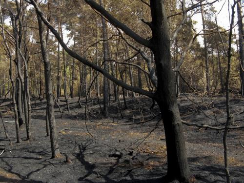 The world's carbon stores are going up in smoke with vanishing wilderness
