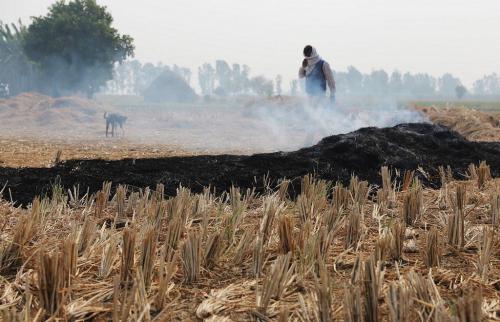 Crop Burning: Punjab and Haryana's killer fields