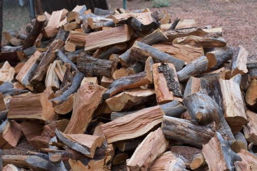 Instead of just conserving trees, harvest wood from them: study