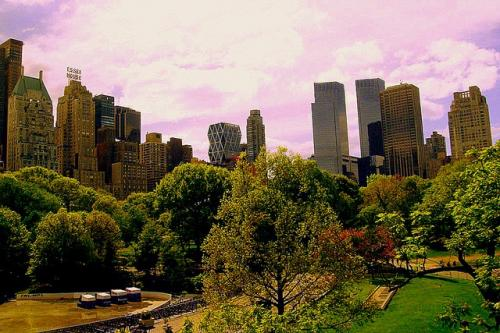 Urban trees can tackle pollution, heat waves