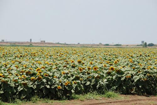 Notable agriculture initiatives discussed at COP 22