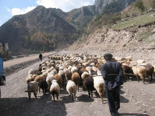 Assuring tenure rights to pastoralists can ensure food security
