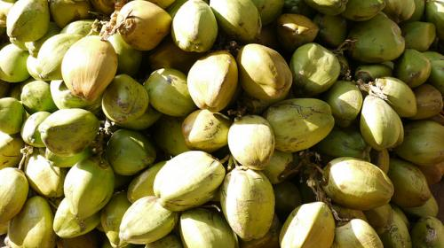 The end of coconut water? The world's trendiest nut is under threat of species collapse