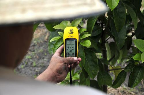 A Colombia-based initiative that collects, processes and aggregates information on the planting decisions of hundreds of the country's fruit farmers to help them make the best choices (Credit: Neil Palmer/CIAT)