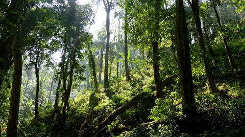 Indigenous trees at risk of disappearing in central Africa