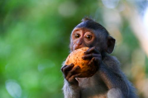 60% of primate species now threatened with extinction, says major new study
