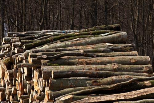 Corruption in timber trade fuels deforestation, biodiversity loss