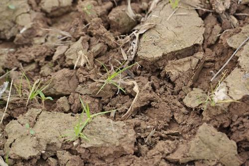 77% soil health cards yet to be issued