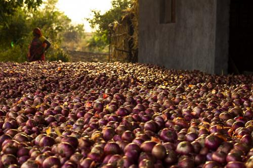 Onion price crash, farmers' distress fail to move governments