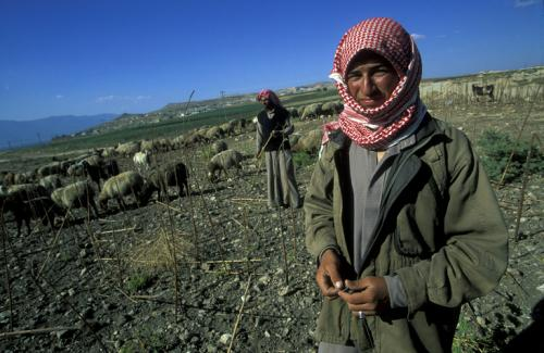 Agriculture becomes casualty of Syrian war, incurs losses worth US$18 billion