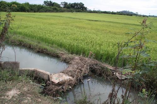 New tool tracks water usage in agriculture