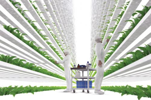 Strawberry fields aren't forever